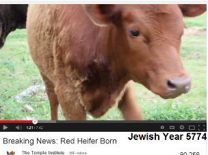red-heifer-born-5774